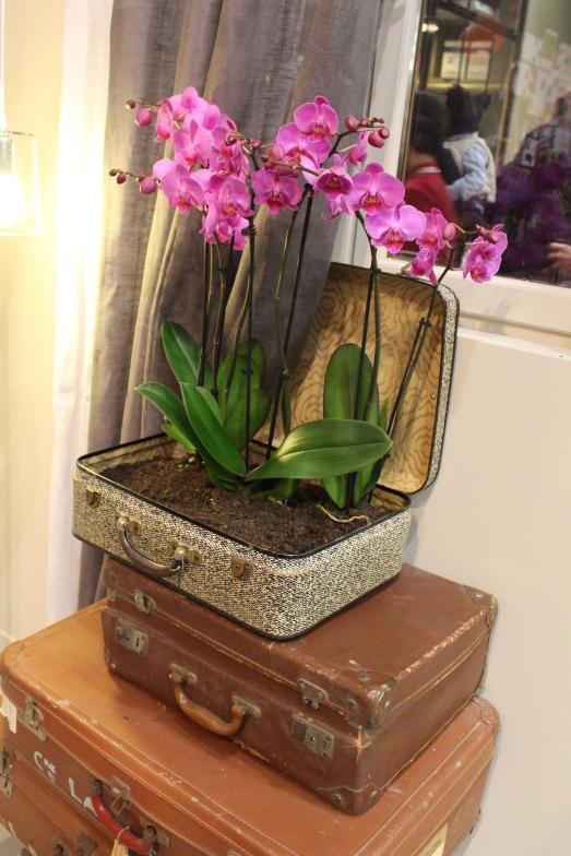 zodio-bordeaux-bègles-décoration-magasin-maison-idée-orchidée-valise-pot-original-plante