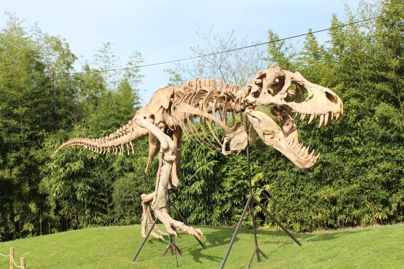 zoo-pessac-bordeaux-enfant-sortie-parc-animalier-dinosaure-opération-raptors-squelette-accueil-tyranosaure