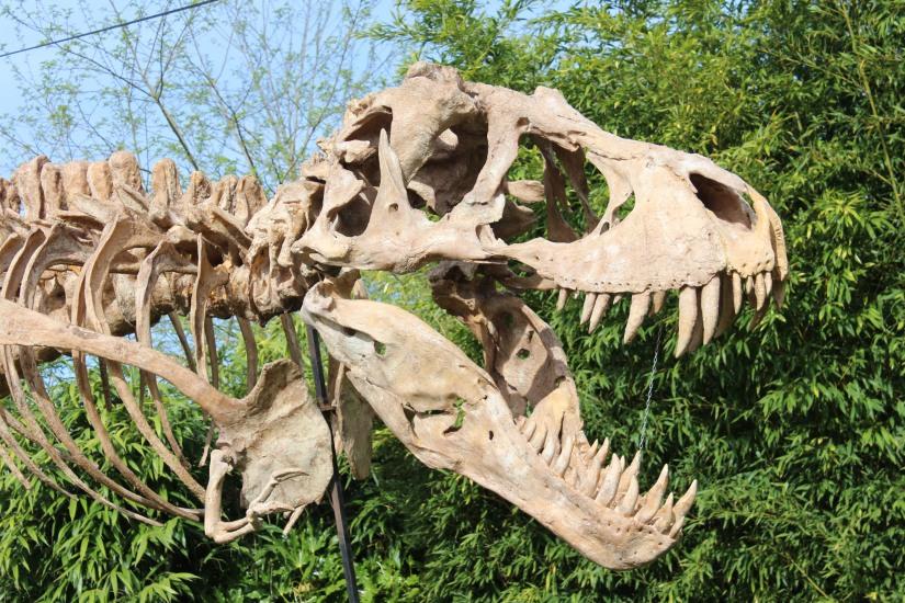 zoo-pessac-bordeaux-enfant-sortie-parc-animalier-dinosaure-opération-raptors-squelette-accueil