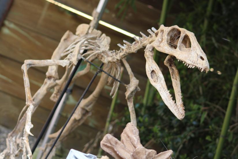zoo-pessac-bordeaux-enfant-sortie-parc-animalier-dinosaure-opération-raptors-squelette-capement-découverte