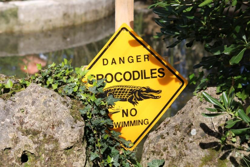 zoo-pessac-bordeaux-enfant-sortie-parc-animalier-dinosaure-opération-raptors-squelette-crocodile