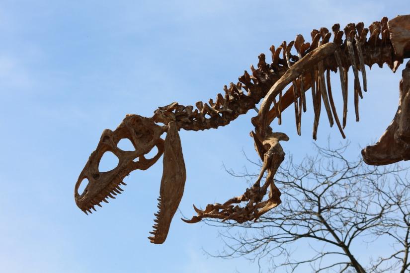 zoo-pessac-bordeaux-enfant-sortie-parc-animalier-dinosaure-opération-raptors-squelette-décoration-découverte