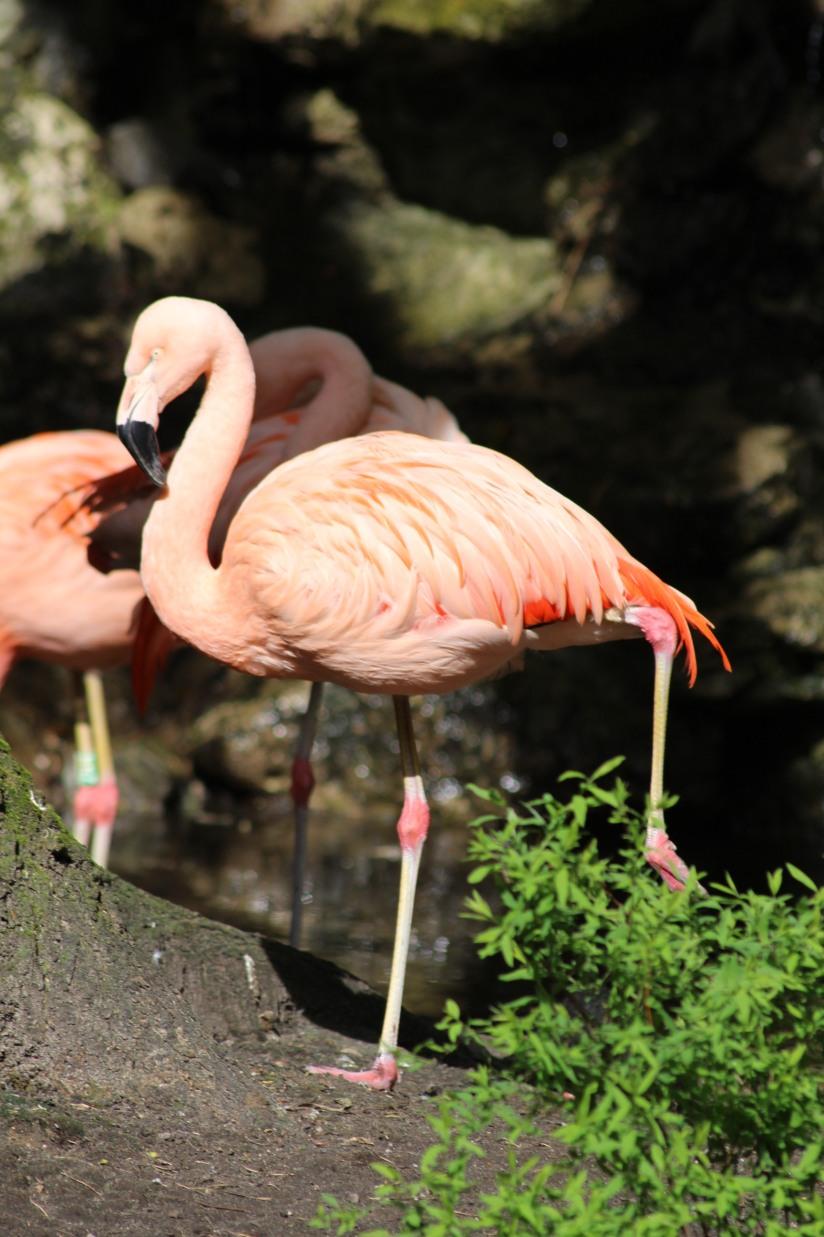 zoo-pessac-bordeaux-enfant-sortie-parc-animalier-dinosaure-opération-raptors-squelette-flamand-rose-oiseau
