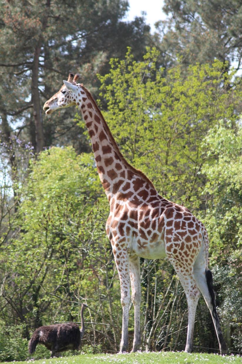 zoo-pessac-bordeaux-enfant-sortie-parc-animalier-dinosaure-opération-raptors-squelette-girafe-soigneur