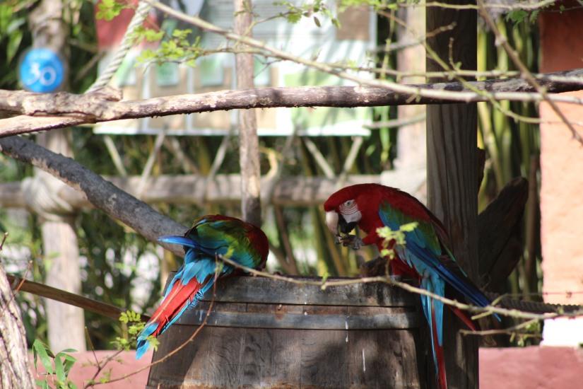 zoo-pessac-bordeaux-enfant-sortie-parc-animalier-dinosaure-opération-raptors-squelette-perroquet-spectacle