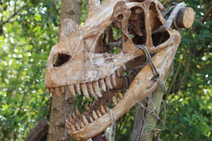 zoo-pessac-bordeaux-enfant-sortie-parc-animalier-dinosaure-opération-raptors-squelette