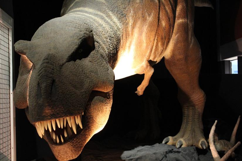 capsciences-t-rex-dinosaure-exposition-atelier-animation-bordeaux-enfant-effrayant-realiste