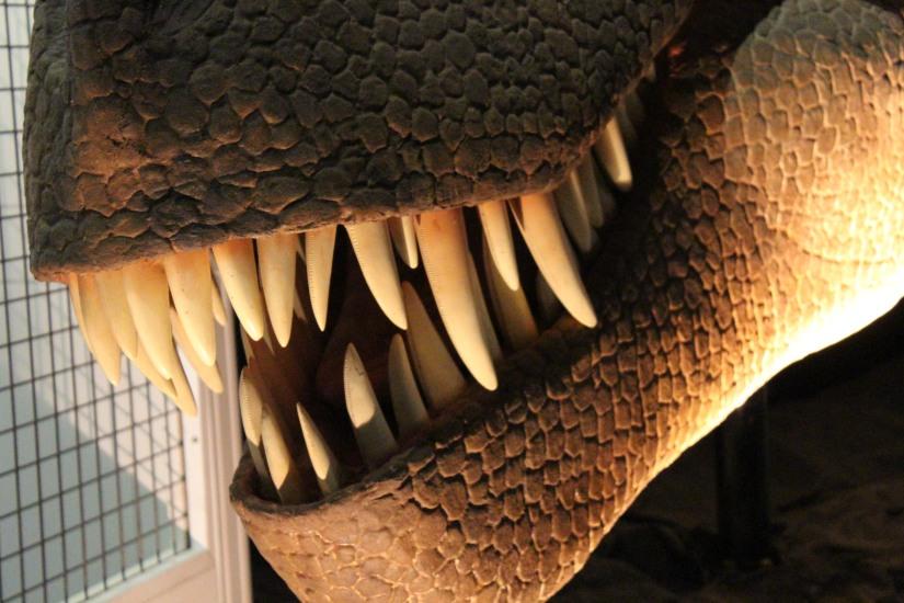 capsciences-t-rex-dinosaure-exposition-atelier-animation-bordeaux-enfant-machoire-dent-taille-robot-automate