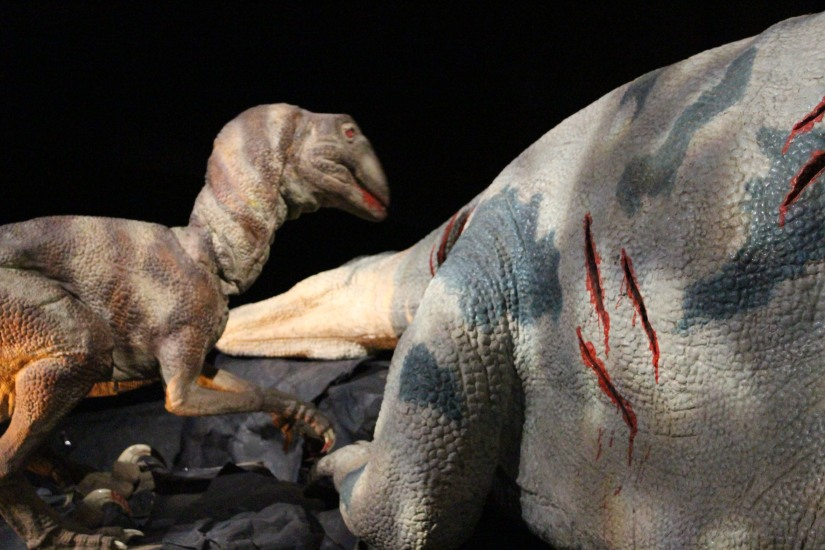capsciences-t-rex-dinosaure-exposition-atelier-animation-bordeaux-enfant-robot-automate-repas-carnivore