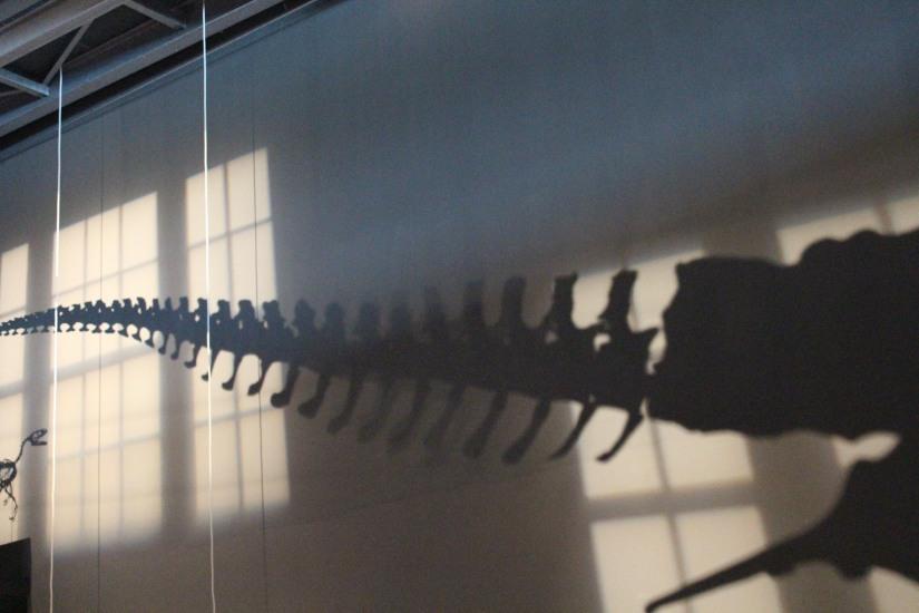 capsciences-t-rex-dinosaure-exposition-atelier-animation-bordeaux-enfant-squelette-entier-queue