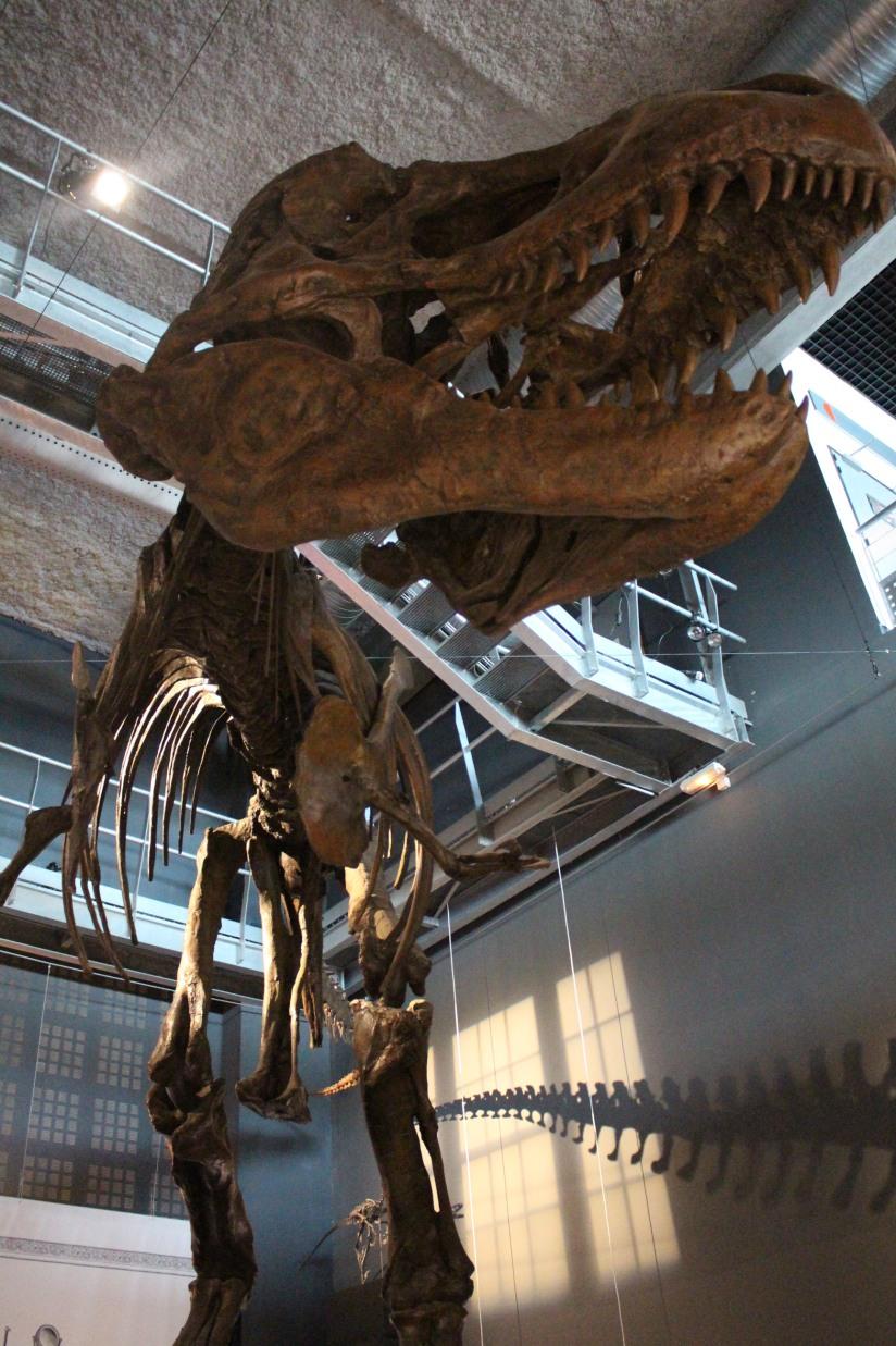 capsciences-t-rex-dinosaure-exposition-atelier-animation-bordeaux-enfant-squelette-grandeur-nature