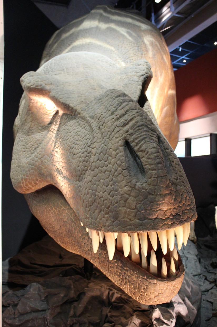capsciences-t-rex-dinosaure-exposition-atelier-animation-bordeaux-enfant-tete-dent-yeux-realiste