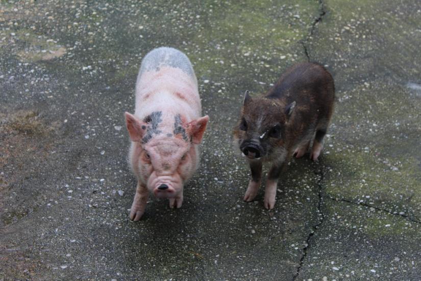 ferme-exotique-cadaujac-zoo-animaux-pedagogique-jeux-manege-petit-train-biberon-tetee-chevre-chameau-cochon