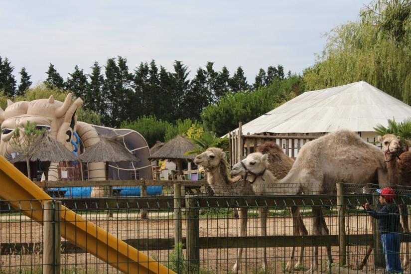 ferme-exotique-cadaujac-zoo-animaux-pedagogique-jeux-manege-petit-train-biberon-tetee-chevre-chameau-dromadaire