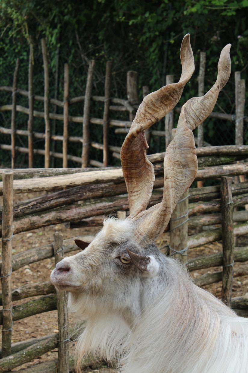 ferme-exotique-cadaujac-zoo-animaux-pedagogique-jeux-manege-petit-train-biberon-tetee-chevre-chameau-parc