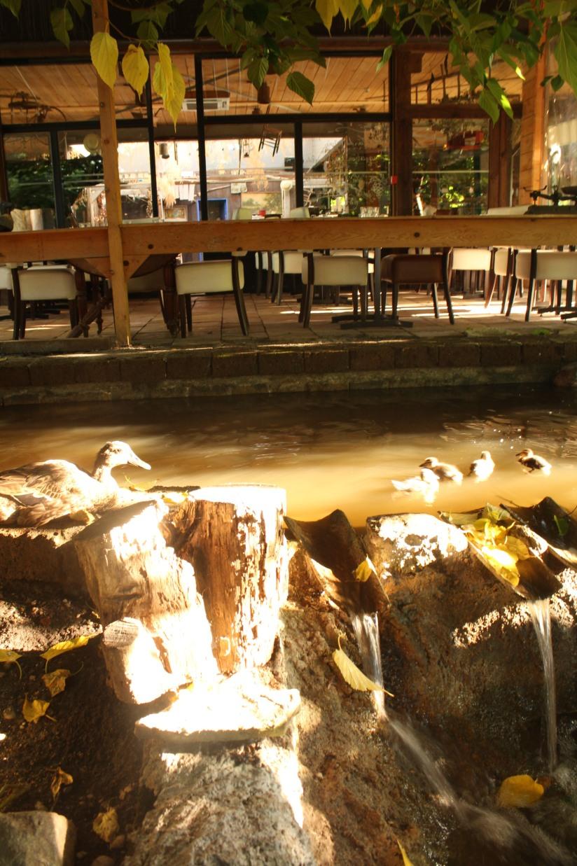 restaurant-la-ferme-bruges-bordeaux-enfant-decor-animaux-coq-canard-campagne-ville-salle-mare-table