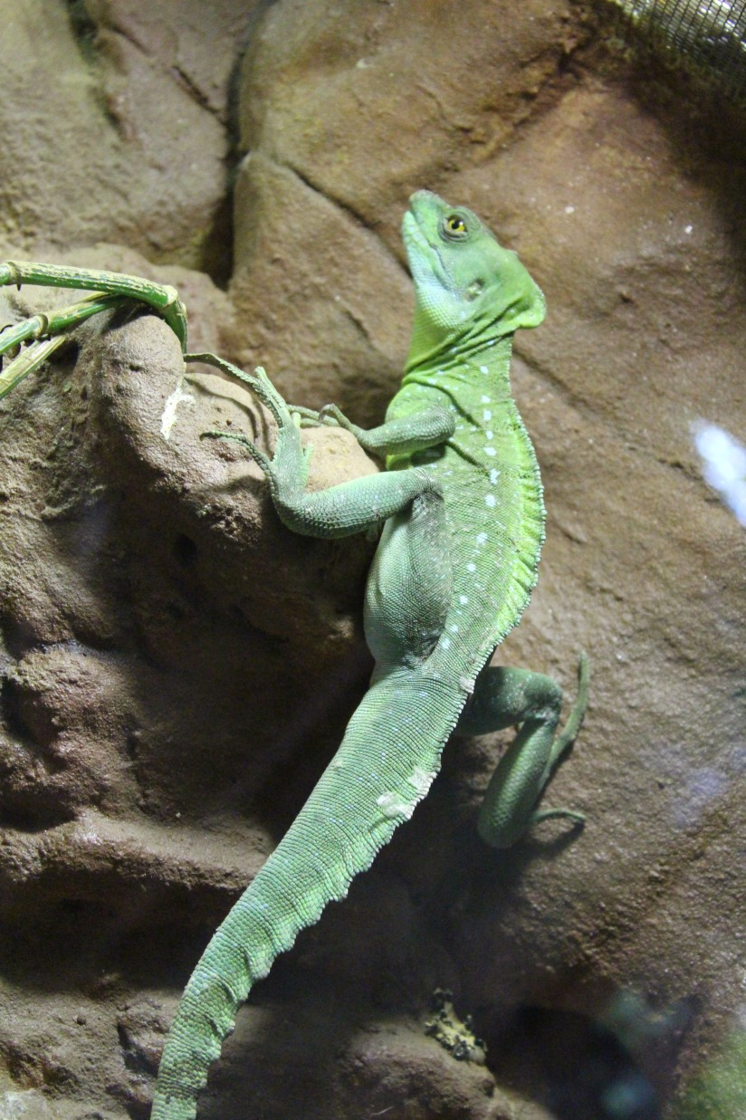 dordogne-perigord-alligator-park-aquarium-village-bournat-cabane-arbres-perchees-tertre-bugue-sarlat-gironde-aquitaine-crocodile-antan-autrefois-1900-siècle-15