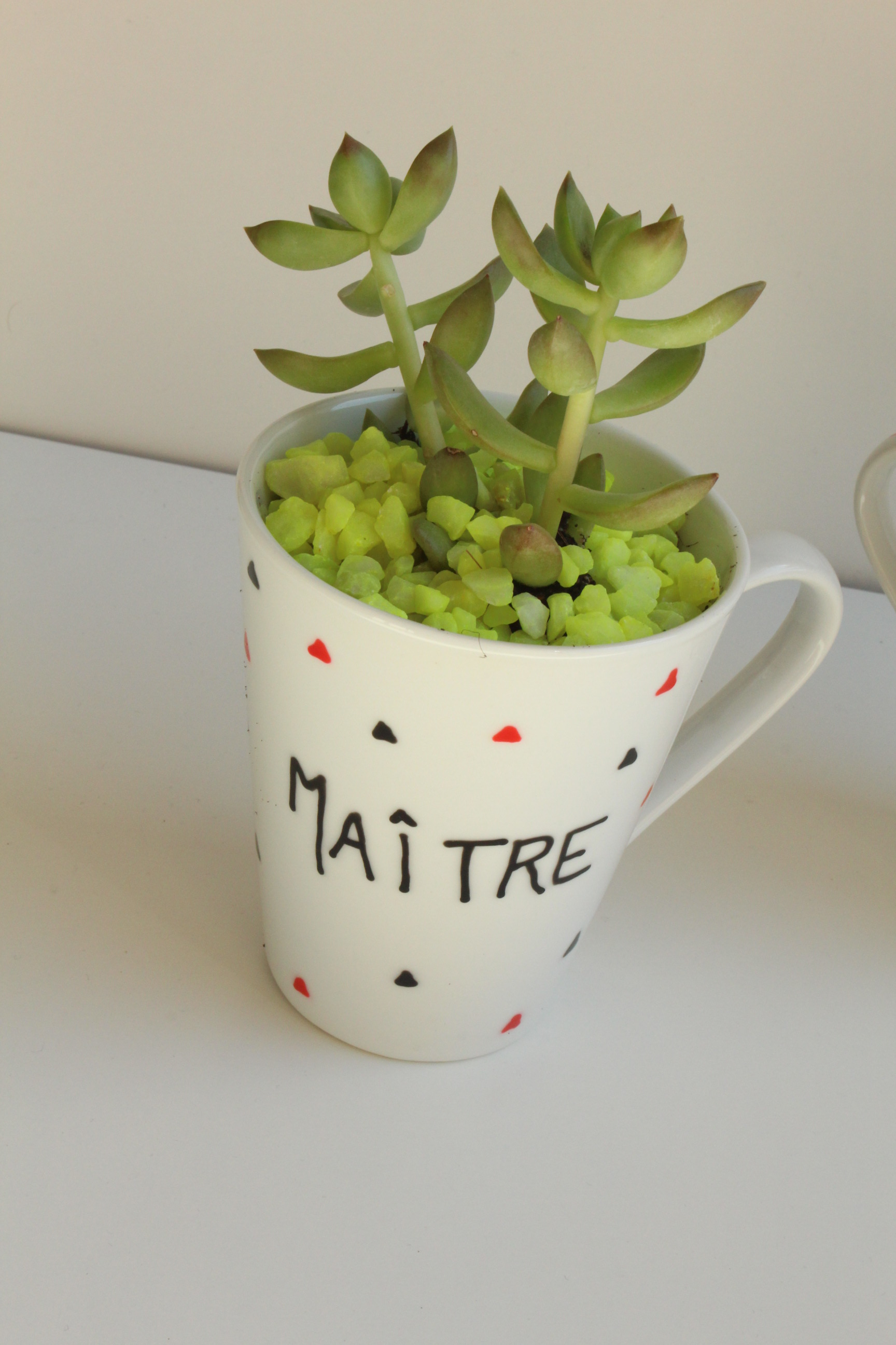 Plante for Plante truffaut