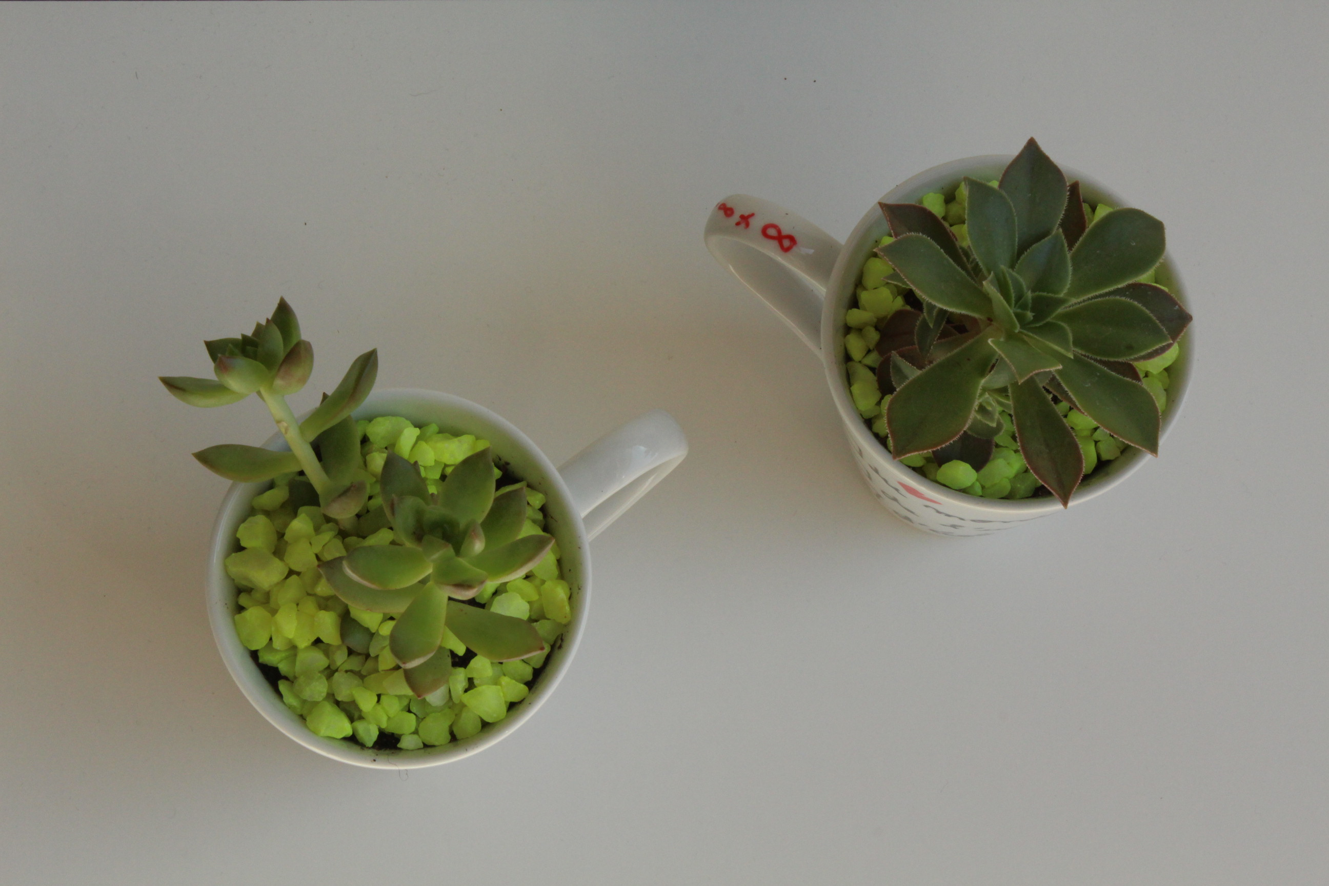 Plante grasse en pot fashion designs for Plante truffaut