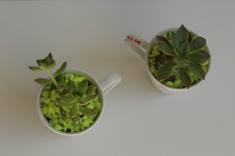 truffaut-flower-party-plante-grasse-succulente-cactus-diy-tuto-brico-enfant-maitre-maitresse-atsem-papa-maman-pot-mug-deco-peinture-porcelaine-facile