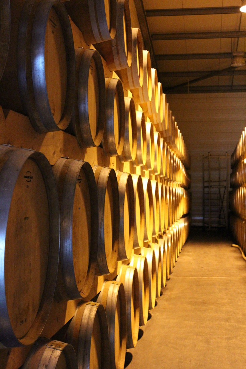vignerons-tutiac-vin-cotes-blaye-rouge-rose-blanc-vigne-verre-degustation-oenotourisme-oenologie-decouverte-visite-chai-cuves-1-12