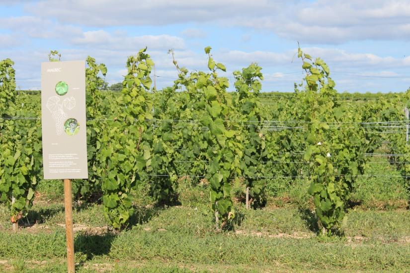 vignerons-tutiac-vin-cotes-blaye-rouge-rose-blanc-vigne-verre-degustation-oenotourisme-oenologie-decouverte-visite-chai-cuves-1-16
