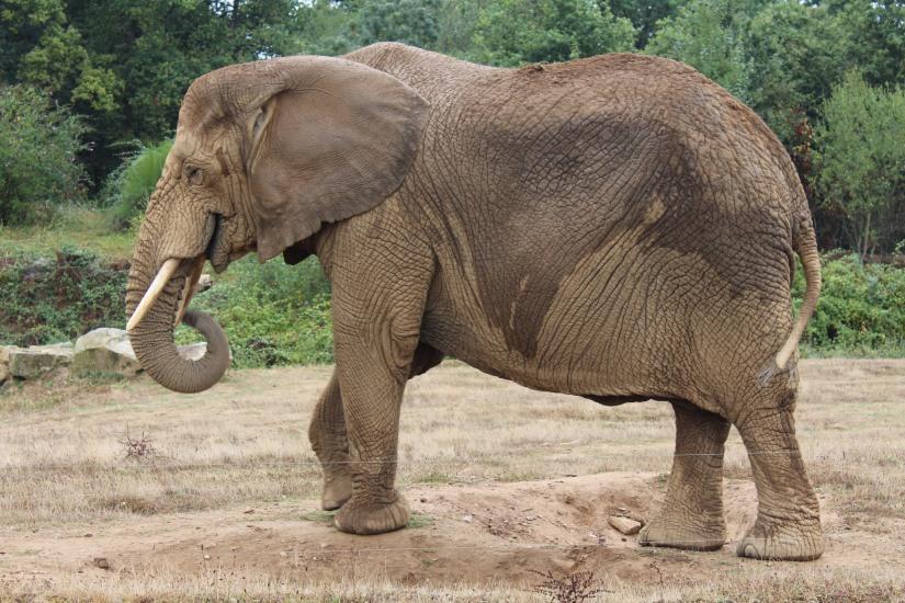 planete-sauvage-zoo-safari-nantes-bretagne-animaux-raid-bivouac-spectacle-dauphin-lion-lemurien-maki-famille-enfant-sortie-activite-parc-animalier-aventure-soigneur-rencontre-nourrir-3-17