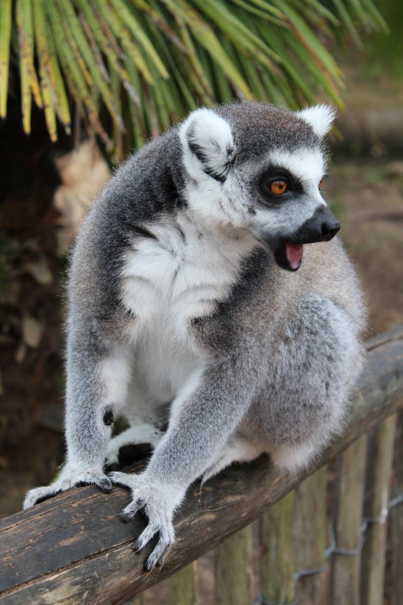 planete-sauvage-zoo-safari-nantes-bretagne-animaux-raid-bivouac-spectacle-dauphin-lion-lemurien-maki-famille-enfant-sortie-activite-parc-animalier-aventure-soigneur-rencontre-nourrir-3-6