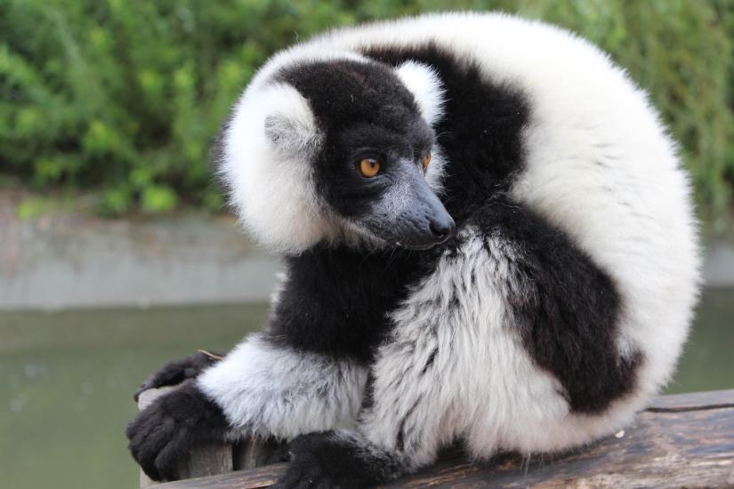 planete-sauvage-zoo-safari-nantes-bretagne-animaux-raid-bivouac-spectacle-dauphin-lion-lemurien-maki-famille-enfant-sortie-activite-parc-animalier-aventure-soigneur-rencontre-nourrir-3-7