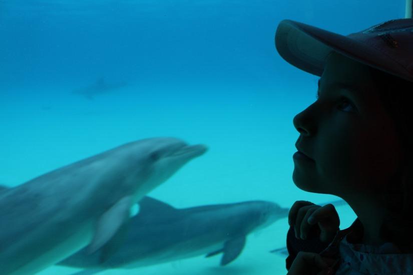 planete-sauvage-zoo-safari-nantes-bretagne-animaux-raid-bivouac-spectacle-dauphin-lion-lemurien-maki-famille-enfant-sortie-activite-parc-animalier-aventure-soigneur-rencontre-nourrir-3-9