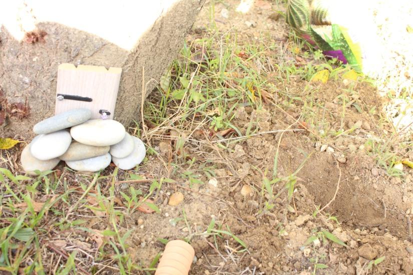 maison-fée-fee-fairy-garden-home-house-porte-jardin-deco-brico-tuto-diy-jeux-activité-enfant-imagination-truffaut-loisir-creatif-figurine-schleich-plante (2)