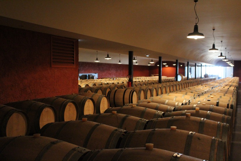 chateau-rayne-vigneau-sauternes-bommes-bordeaux-oenotourisme-vin-blanc-wine-decouverte-arbres-grimper-perché-degustation-ciron-assemblage-atelier-visite-chai (1)