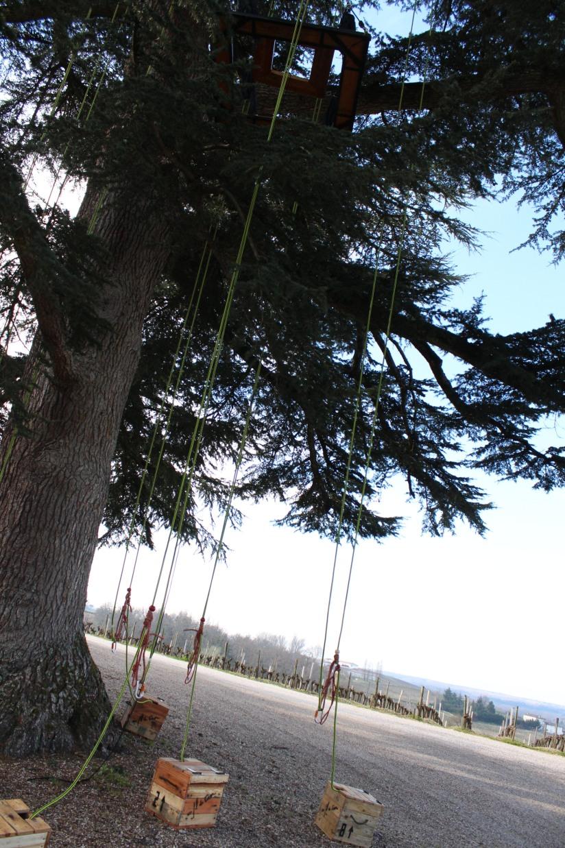 chateau-rayne-vigneau-sauternes-bommes-bordeaux-oenotourisme-vin-blanc-wine-decouverte-arbres-grimper-perché-degustation-ciron-assemblage-atelier-visite-chai (9)
