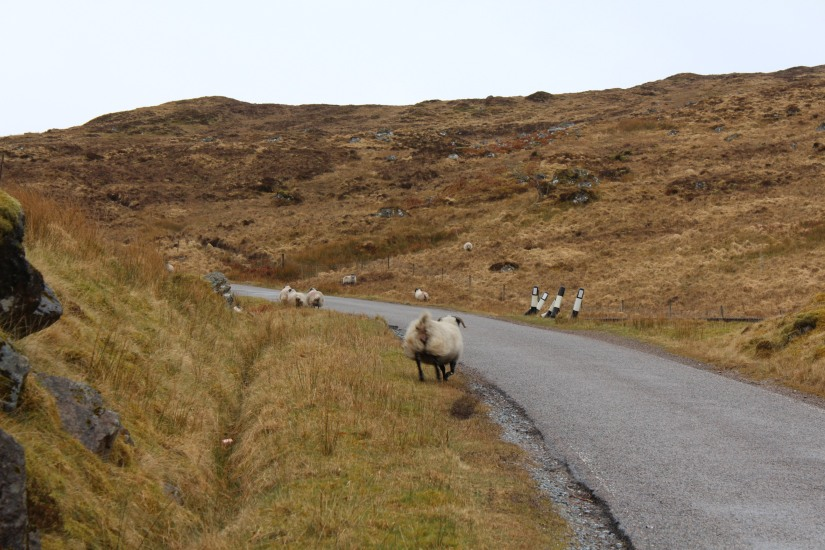 ile-mull-isle-island-ecosse-scotland-road-trip-voyage-loch-lac-decouverte-balade-phare (3)