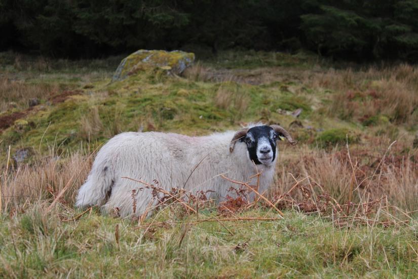 ile-mull-isle-island-ecosse-scotland-road-trip-voyage-loch-lac-decouverte-balade-phare (4)