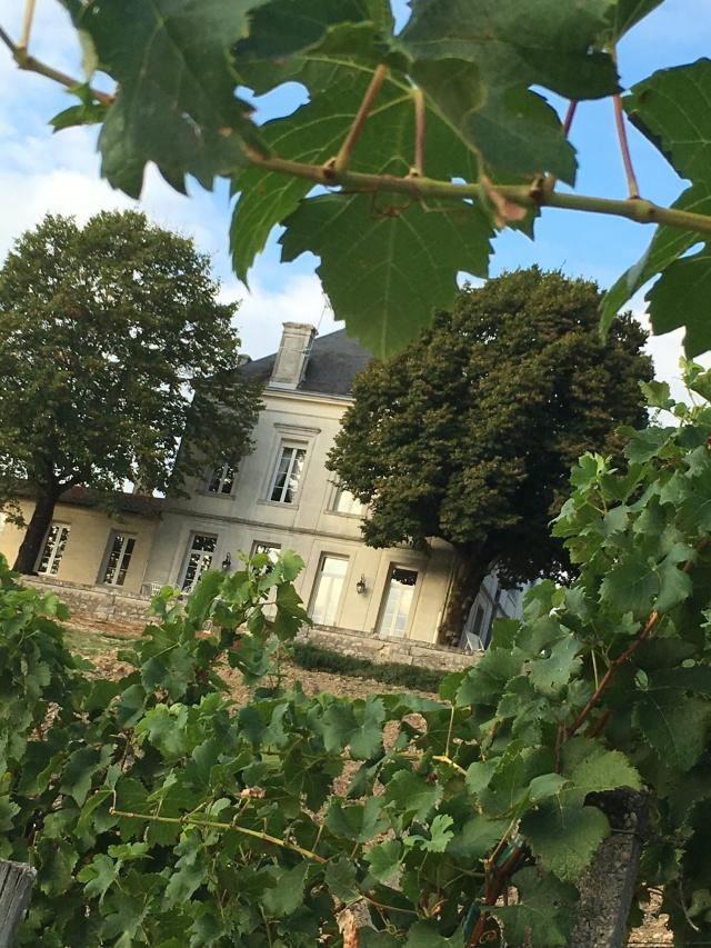 chateau-tournefeuille-neac-lalande-pomerol-saint-emilion-vigne-vignoble-chambre-hote-vins-oenotourisme-famille-gironde-aquitaine-10