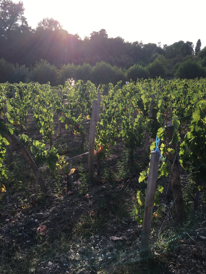 chateau-tournefeuille-neac-lalande-pomerol-saint-emilion-vigne-vignoble-chambre-hote-vins-oenotourisme-famille-gironde-aquitaine-12