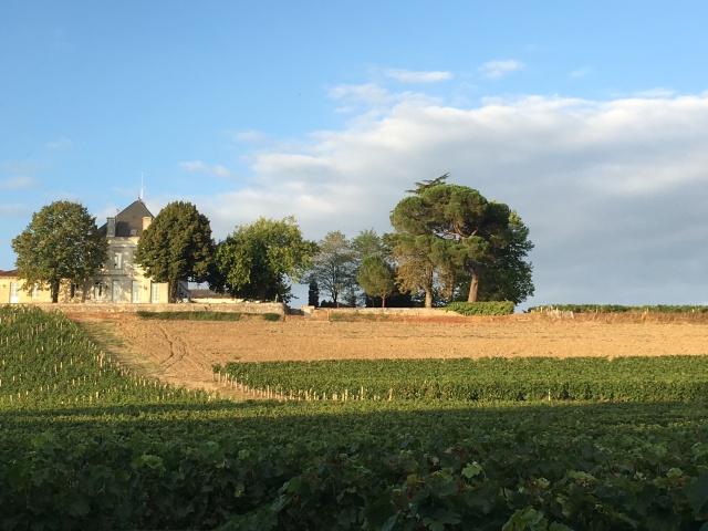 chateau-tournefeuille-neac-lalande-pomerol-saint-emilion-vigne-vignoble-chambre-hote-vins-oenotourisme-famille-gironde-aquitaine-14