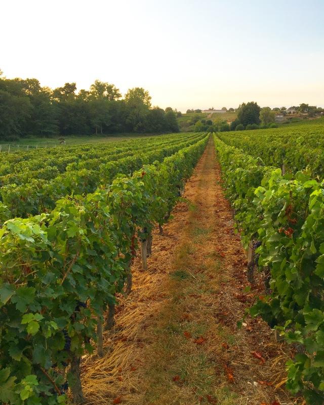 chateau-tournefeuille-neac-lalande-pomerol-saint-emilion-vigne-vignoble-chambre-hote-vins-oenotourisme-famille-gironde-aquitaine-16