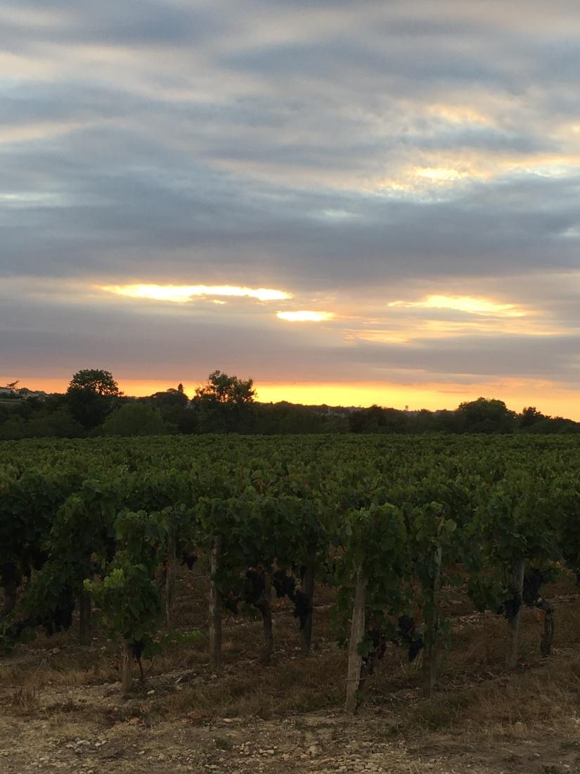 chateau-tournefeuille-neac-lalande-pomerol-saint-emilion-vigne-vignoble-chambre-hote-vins-oenotourisme-famille-gironde-aquitaine-18
