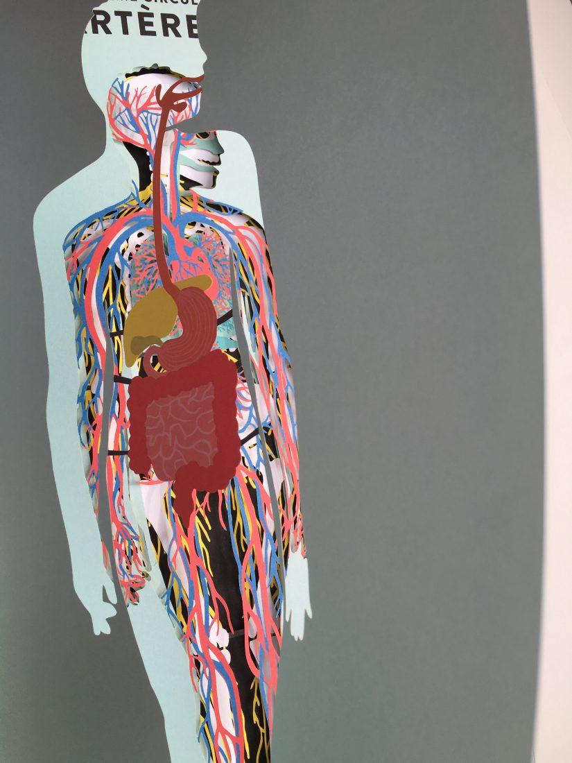 livre-jeunesse-anatomie-seuil-delamartiniere-editions-corps-humain-usborne-lecture-enfant-jeune-public-decouverte-3