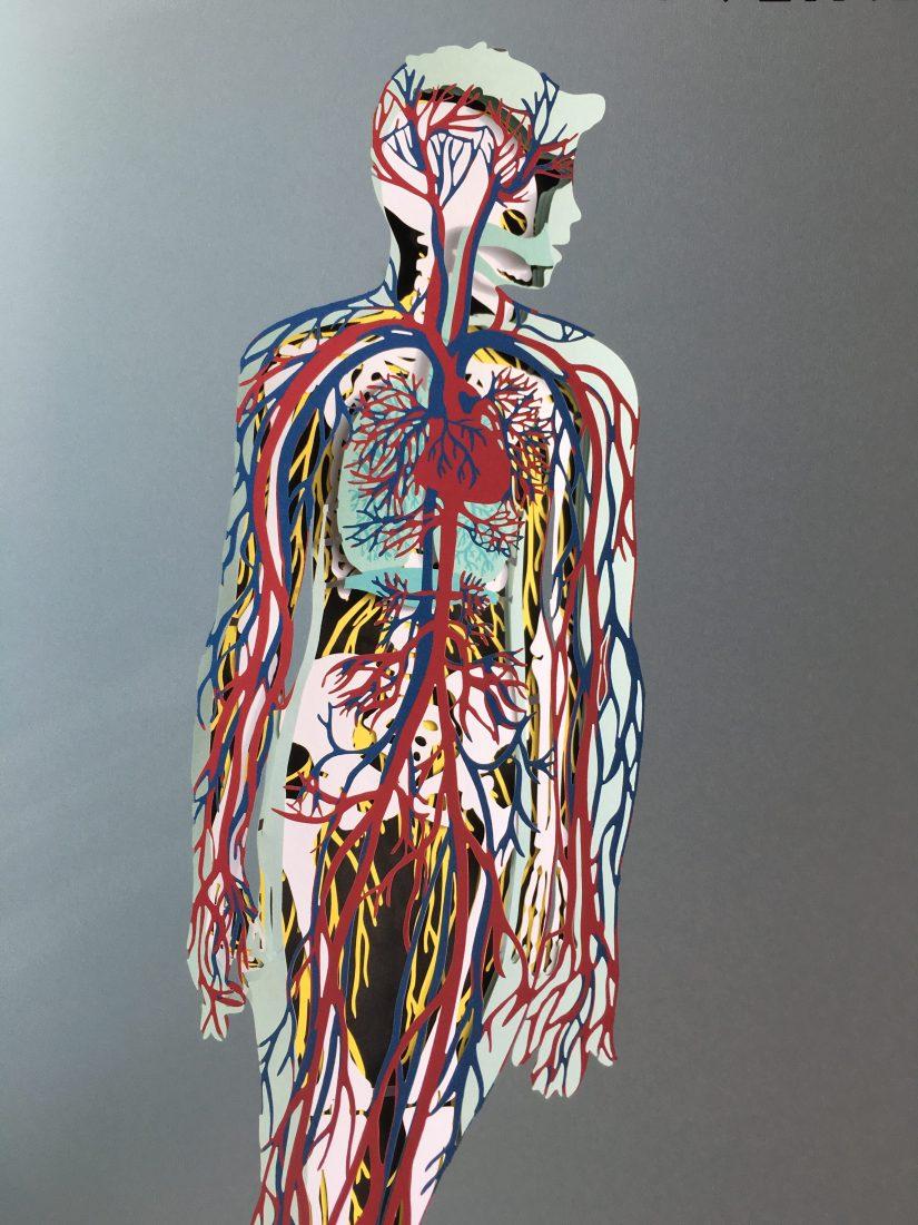 livre-jeunesse-anatomie-seuil-delamartiniere-editions-corps-humain-usborne-lecture-enfant-jeune-public-decouverte-4