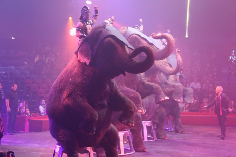 cirque-arlette-gruss-show-spectacle-bordeaux-chapiteau-quinconces-pteapotes-18
